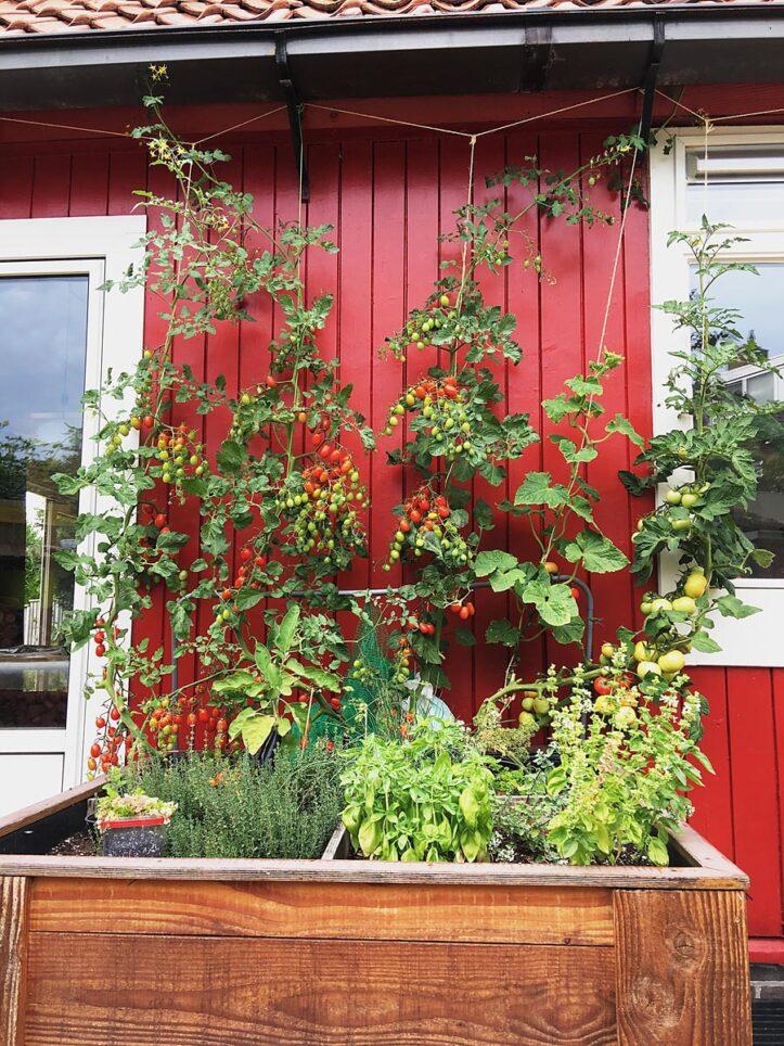 DIY Build it yourself square garden Huerta by Rob