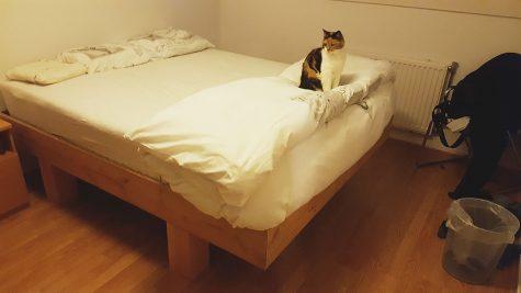 DIY designer double bed 'Azobe' by-Rika-W
